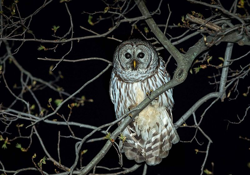 Squirming The Worm - Owls