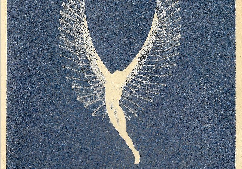 Sounds of the Dawn - Ojas/Steve Mclinn Special
